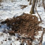 Deer Hunting Bedding Areas | Late Season Tactics