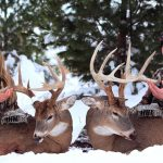 How Active Scent Control Creates Hunting Opportunities