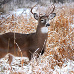 Passive VS Active Scent Control For Whitetail Hunters